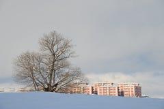 Neige et arbre Photographie stock libre de droits