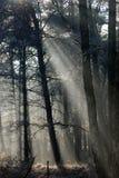Neige et arbres Photos libres de droits