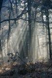 Neige et arbres Image stock