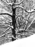 Neige et arbres Photographie stock libre de droits