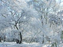 Neige et arbres de l'hiver. images stock