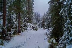 Neige et brouillard dans la forêt, voie photographie stock