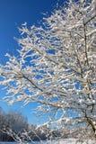 Neige et glace dans l'arbre d'hiver, la Géorgie images stock