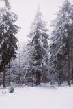 Neige et glace dans la forêt, fond d'hiver images stock