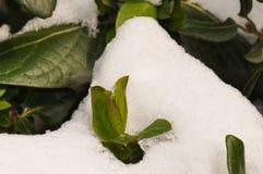 Neige et glace sur la feuille verte Image libre de droits