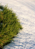 Neige et herbe Photo libre de droits