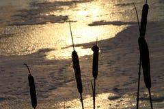 Neige et nature Photo libre de droits
