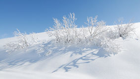 Neige et petit arbre Photo stock