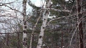 Neige fondant outre des arbres banque de vidéos