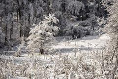 Neige fraîche dans la forêt de montagne photo stock