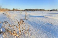 Neige fraîche en nature Fond de l'hiver Photographie stock