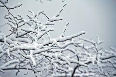 Neige fraîche sur des branches Photographie stock
