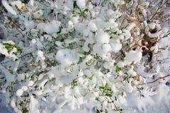 Neige fraîche sur l'herbe et les buissons Photographie stock