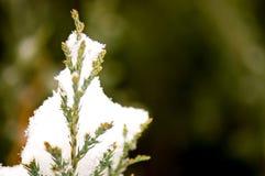 Neige fraîche sur le branchement de pin photos stock