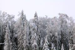 Neige froide blanche de paysage de forêt d'hiver Photos stock
