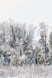 Neige froide blanche de paysage de forêt d'hiver Photo stock