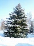 Neige froide d'échelle de vert de sapin de couleur d'hiver Photographie stock libre de droits