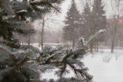 neige impeccable d'hiver de parc de ville de branche image libre de droits