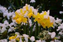 Neige jaune Photo libre de droits