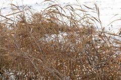 neige jaune d'hiver d'herbe Photo stock