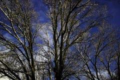 Neige légère sur des dessus d'arbre Photographie stock libre de droits