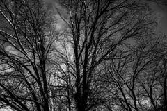 Neige légère sur des dessus d'arbre Photos stock