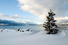 Neige Lake Tahoe d'arbre Image stock