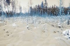 Neige magique Forest In The North Photographie stock