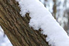 Neige pendant le jour d'hiver heureux ensoleillé lumineux de parc Blanc enneigement l'arbre photos stock