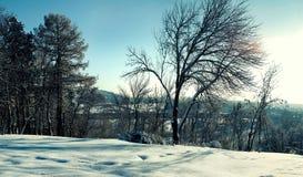 Neige profonde sur un fond des arbres nus en hiver Photos libres de droits