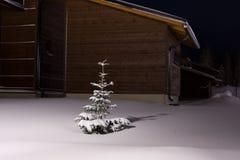 neige recouverte de sapin photo stock