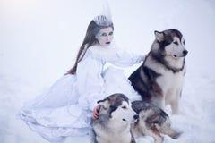 Neige-reine Fille de conte de fées avec les chiens de traîneau ou le Malamute Image libre de droits