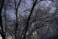 Neige sur des arbres Photo libre de droits