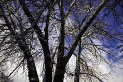 Neige sur des arbres Image stock