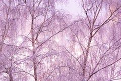 Neige sur des bouleaux la nuit Photographie stock libre de droits