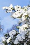 Neige sur des branchements d'arbre Photos stock