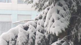 Neige sur des branches de sapin clips vidéos