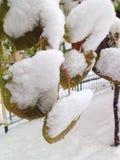 Neige sur des feuilles Photos stock