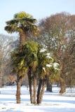 Neige sur des palmiers Photographie stock