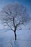 Neige sur l'arbre Images libres de droits
