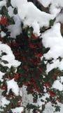 Neige sur l'arbre Photos stock