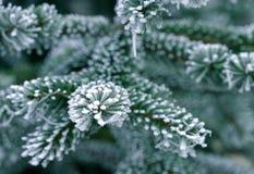 Neige sur l'arbre de pin Image stock