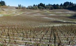 Neige sur l'au sol de vignoble Photographie stock