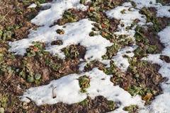 Neige sur l'herbe photo libre de droits