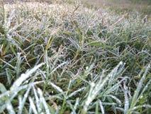 Neige sur l'herbe au matin photographie stock