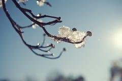 Neige sur la branche Photo libre de droits
