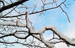 Neige sur la branche Photographie stock