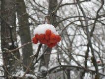 Neige sur la ceinture verte rouge Boise Idaho de baies photos libres de droits