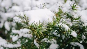 Neige sur la lame Photos libres de droits