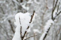 Neige sur le branchement Photographie stock libre de droits